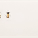 katrin-coetzer_insect-study_watercolour-on-arches_235x385mm_framed_web