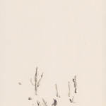 katrin coetzer_the botanist_ink on cotton paper_356x294mm_framed_web