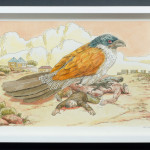 daniel du plessis_burchells coucal_2014_ink and acrylic on paper_290x390mm_framed_web